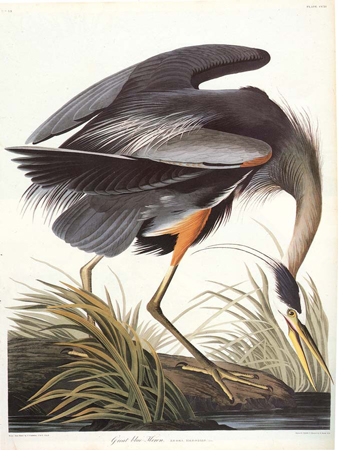 John James Audubon Exhibit